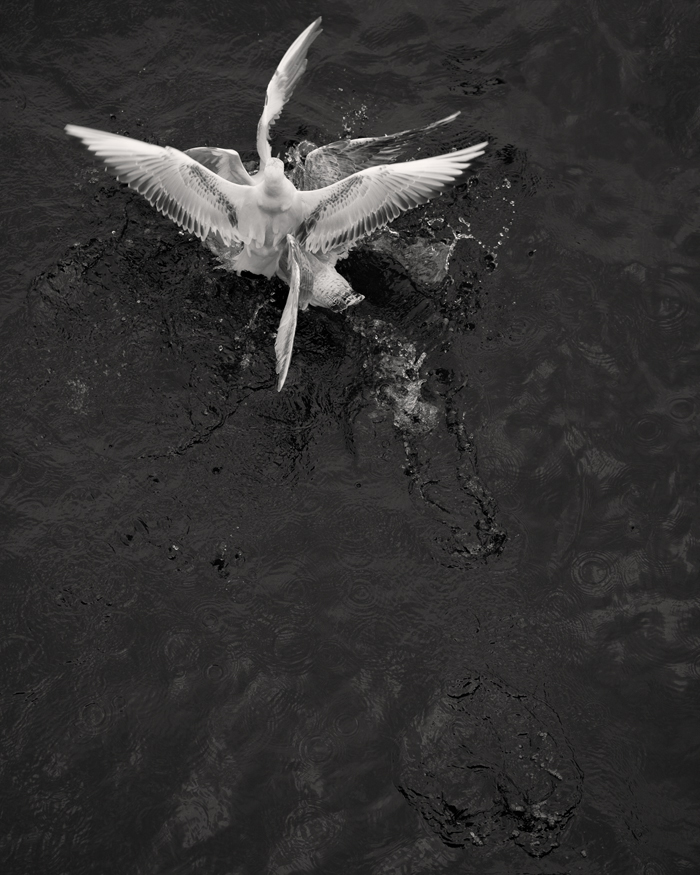 © Loredana Nemes – Greed #02, April 2014