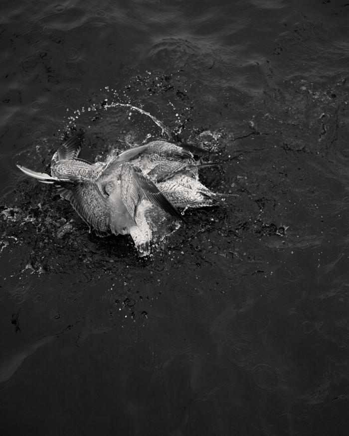 © Loredana Nemes – Greed #11, April 2014