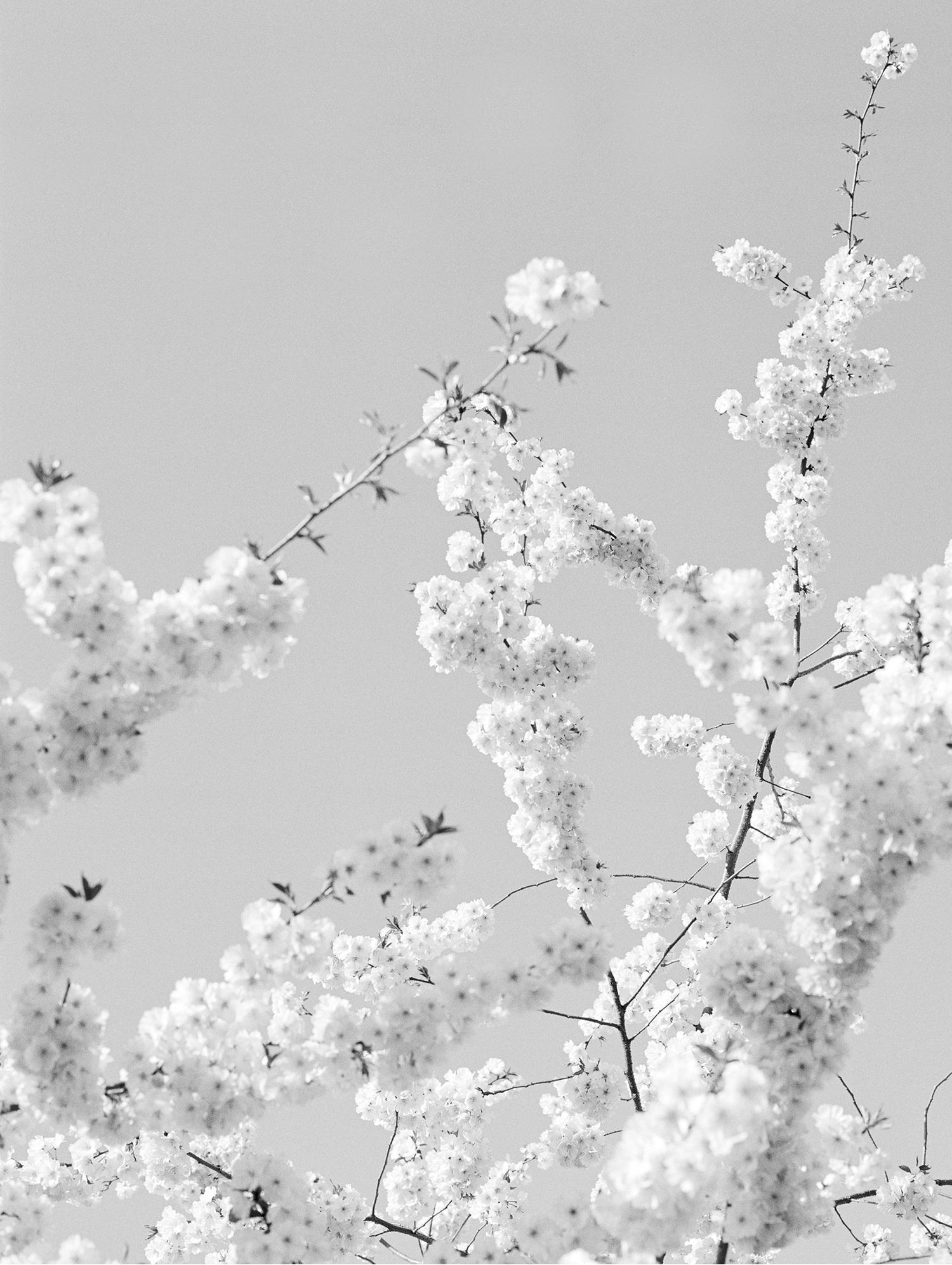 © Loredana Nemes, Blossom, BZ02 2012 in Ludwigsburg Tryptich (a)