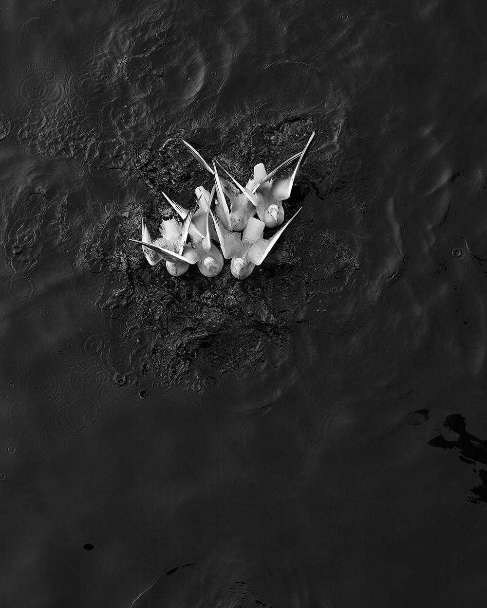 © Loredana Nemes – Greed #06, April 2014