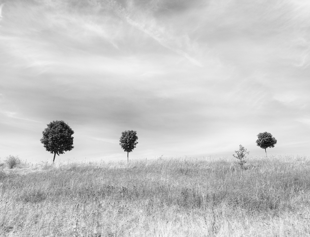 © Betsy Weis, Trees in a Distance - Courtesy KLV Art Projects